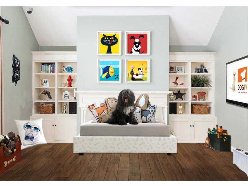 Pet friendly house project aims to make living with pets a lot better professor 39 s house prlog - Make house pet friendly ...