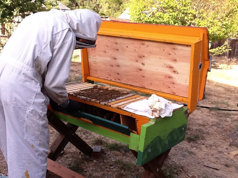 Dr. Resnick Harvests Honey from Experimental Hive