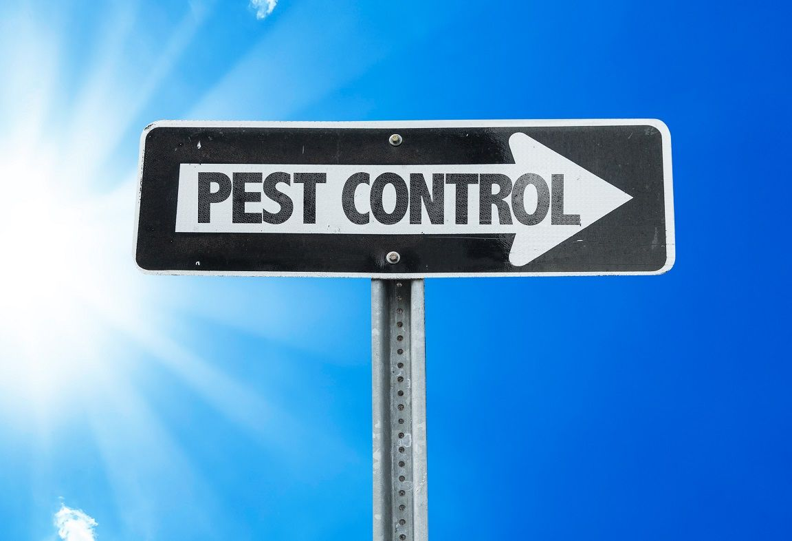 Pest Control Company in Plantation Offers Affordable ...