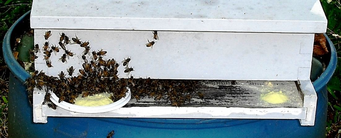 Honeybees Enjoy New Bee Food at Experimental Hive in North Carolina