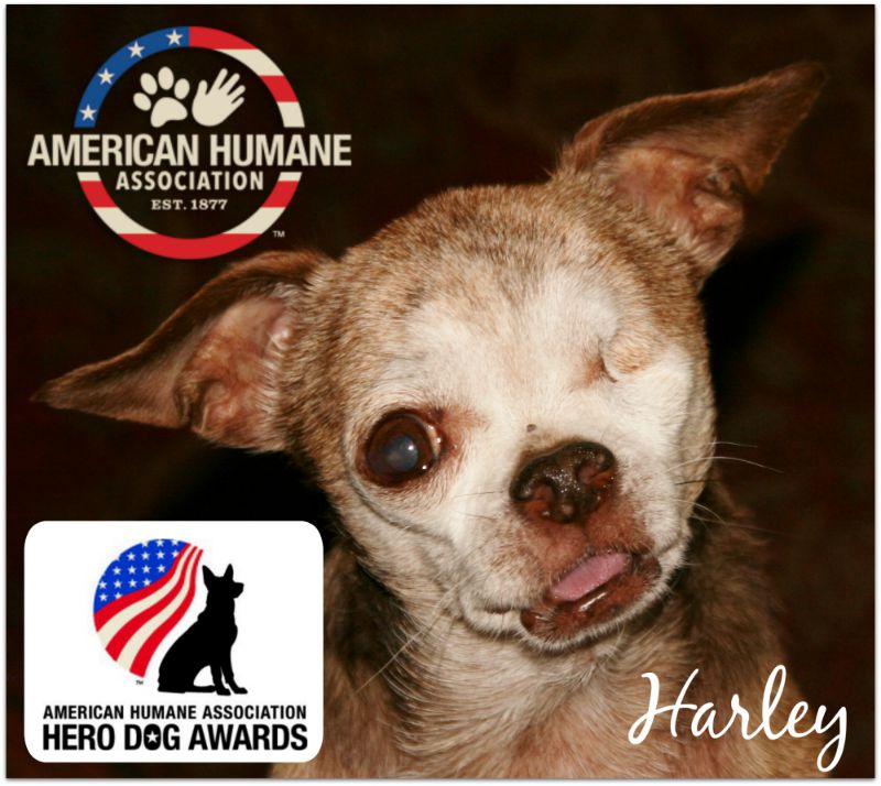 "Harley - Hero Dog Awards 'Emerging Hero"""