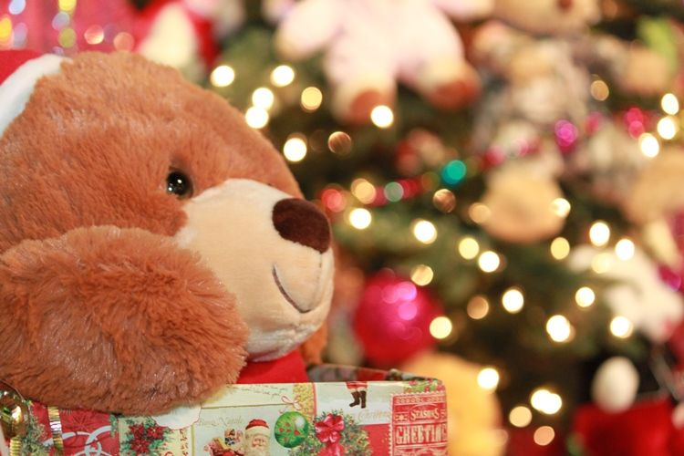Bears are needed for the Festival of Trees annual Teddy Bear Drive
