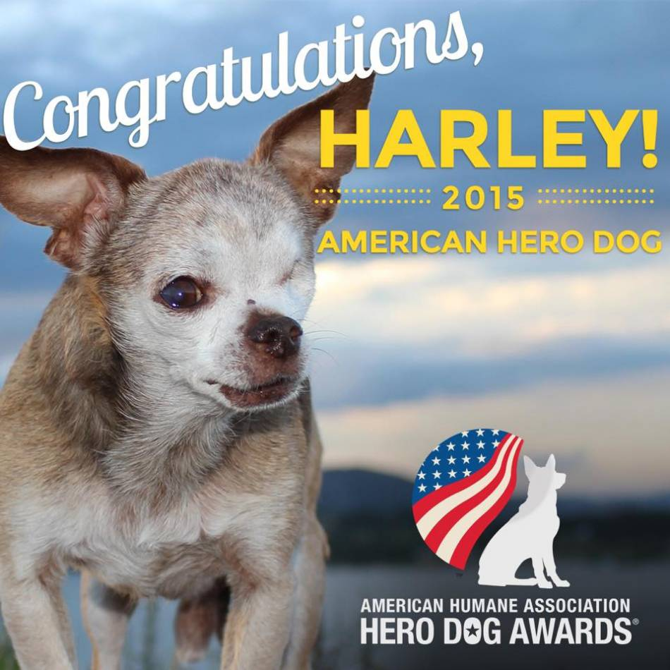 Harley - American Hero Dog