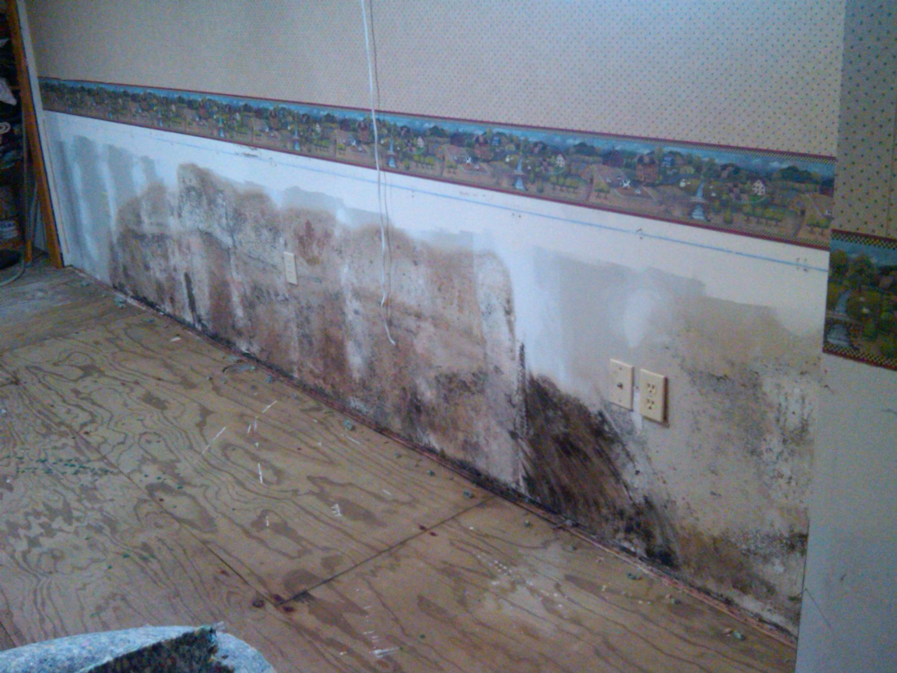 basement mold from flooding