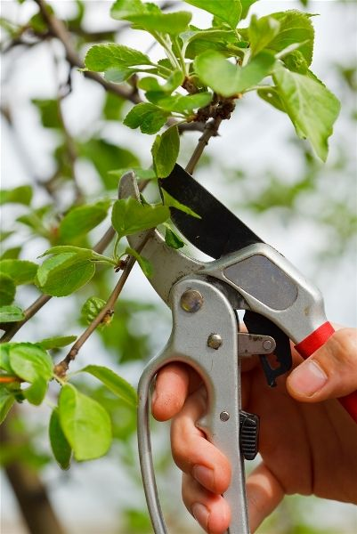 Efficient gardening london ideas for newbies fast for Garden maintenance london
