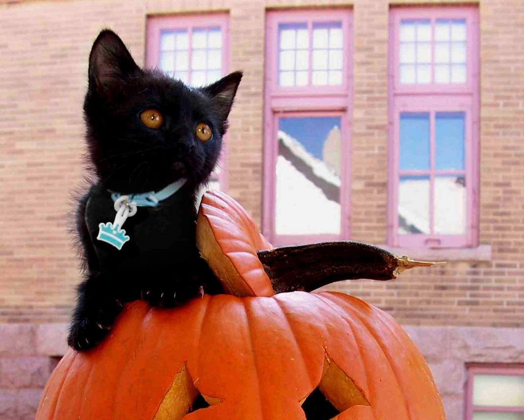 Twigo Tags Halloween Cat!