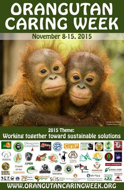 Orangutan Caring Week Poster