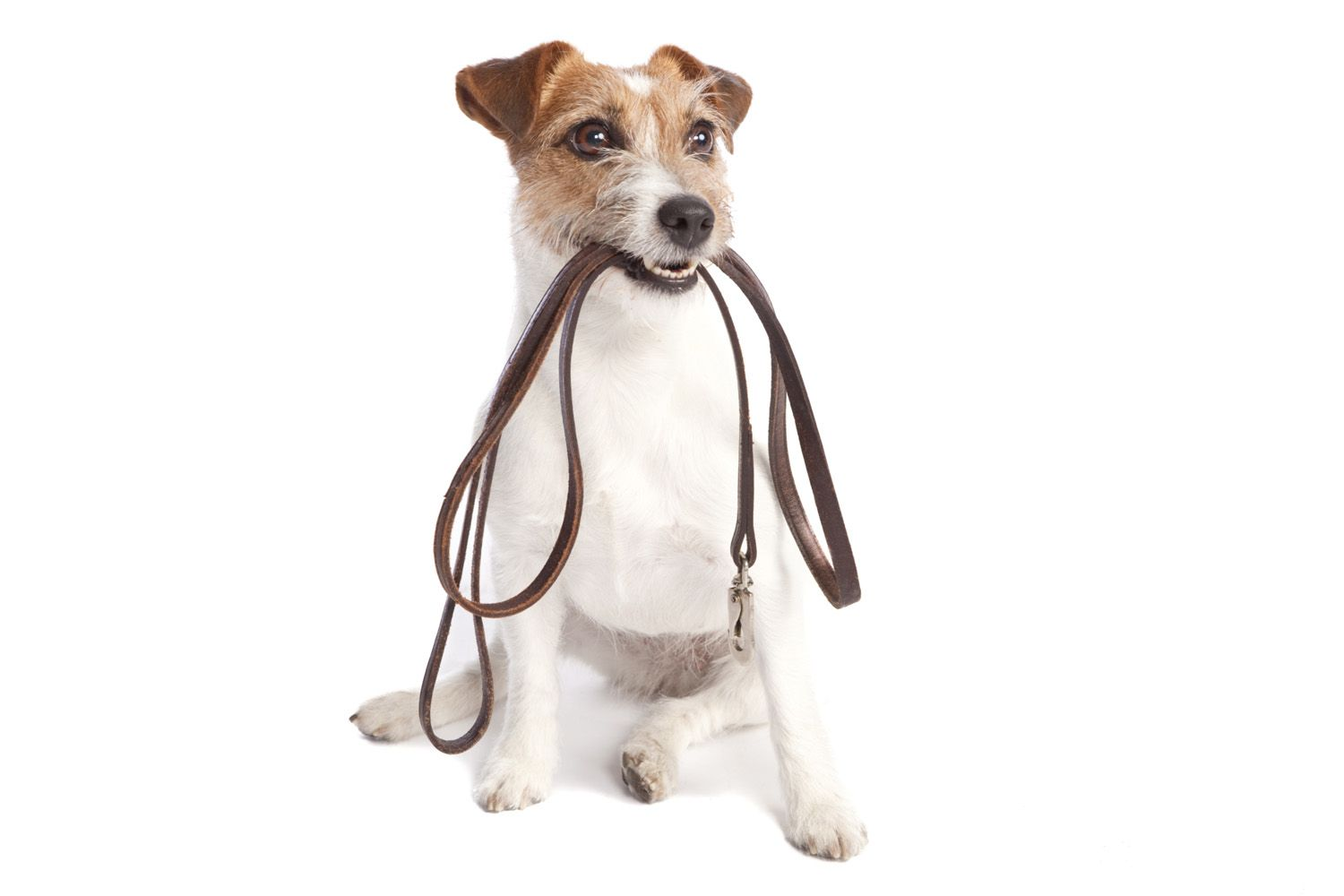 Nanette's Pampered Pets in Boca Raton provides Private Dog Walking Services