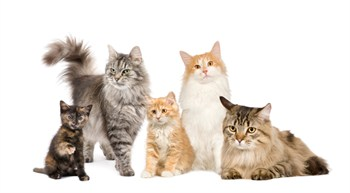 Cat Sitting Services in Boca Raton by Nanette's Pampered Pets
