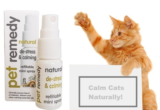 Pet Remedy for Cats