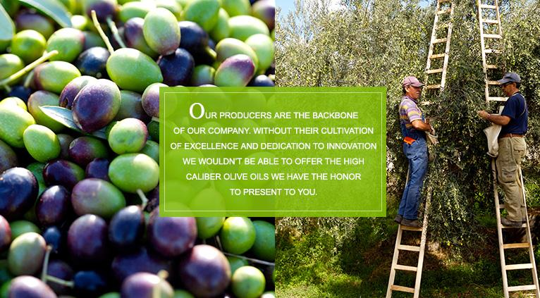Olive Oil: True Gold or