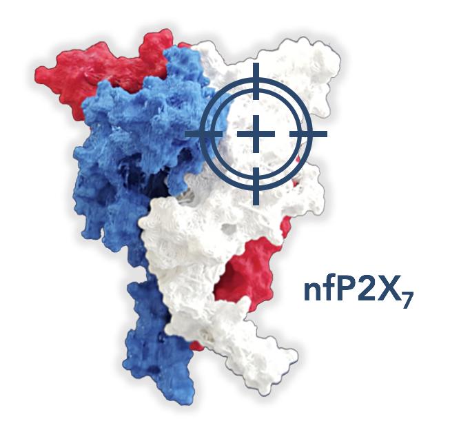 Novel oncology target nfP2X7