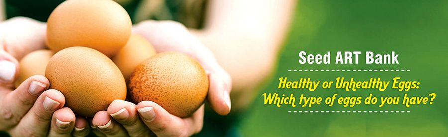 Healthy or Unhealthy Eggs: Which type of eggs do you have? -- Seed ...