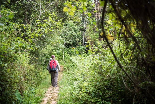 5.-Trekking-at-Andasibe