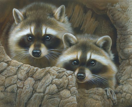 """Racoons"" watercolor painting by Rebecca Latham"