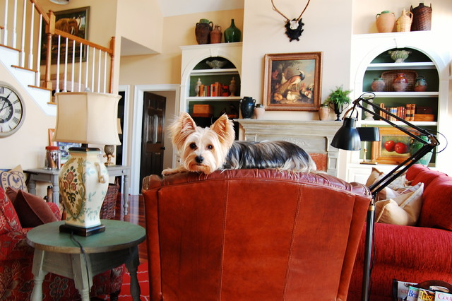 Dog Sitting Services by Nanette's Pampered Pets in Boca Raton