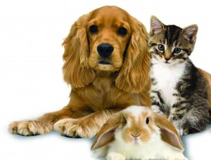 Pet Sitting Services by Nanette's Pampered Pets in Boca Raton