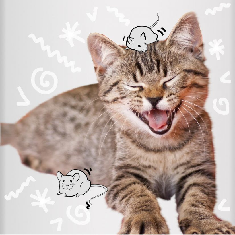 Feline Fancies Launches A Brilliant New Cat Subscription