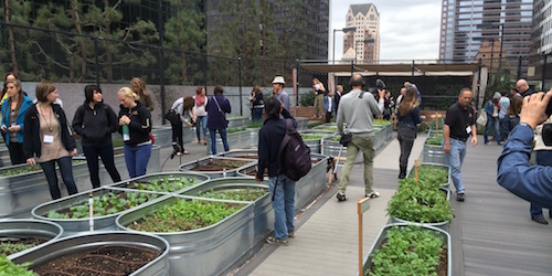 A rooftop urban farm in Los Angeles. Photo credit: Seedstock.