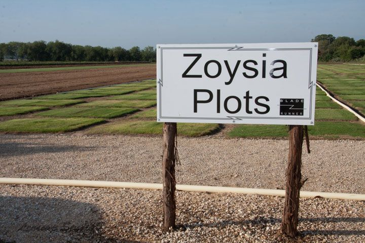 Zoysia Plots at Bladerunner Farms