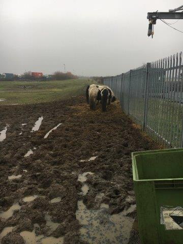 Horse Welfare Crisis February 2017 sml