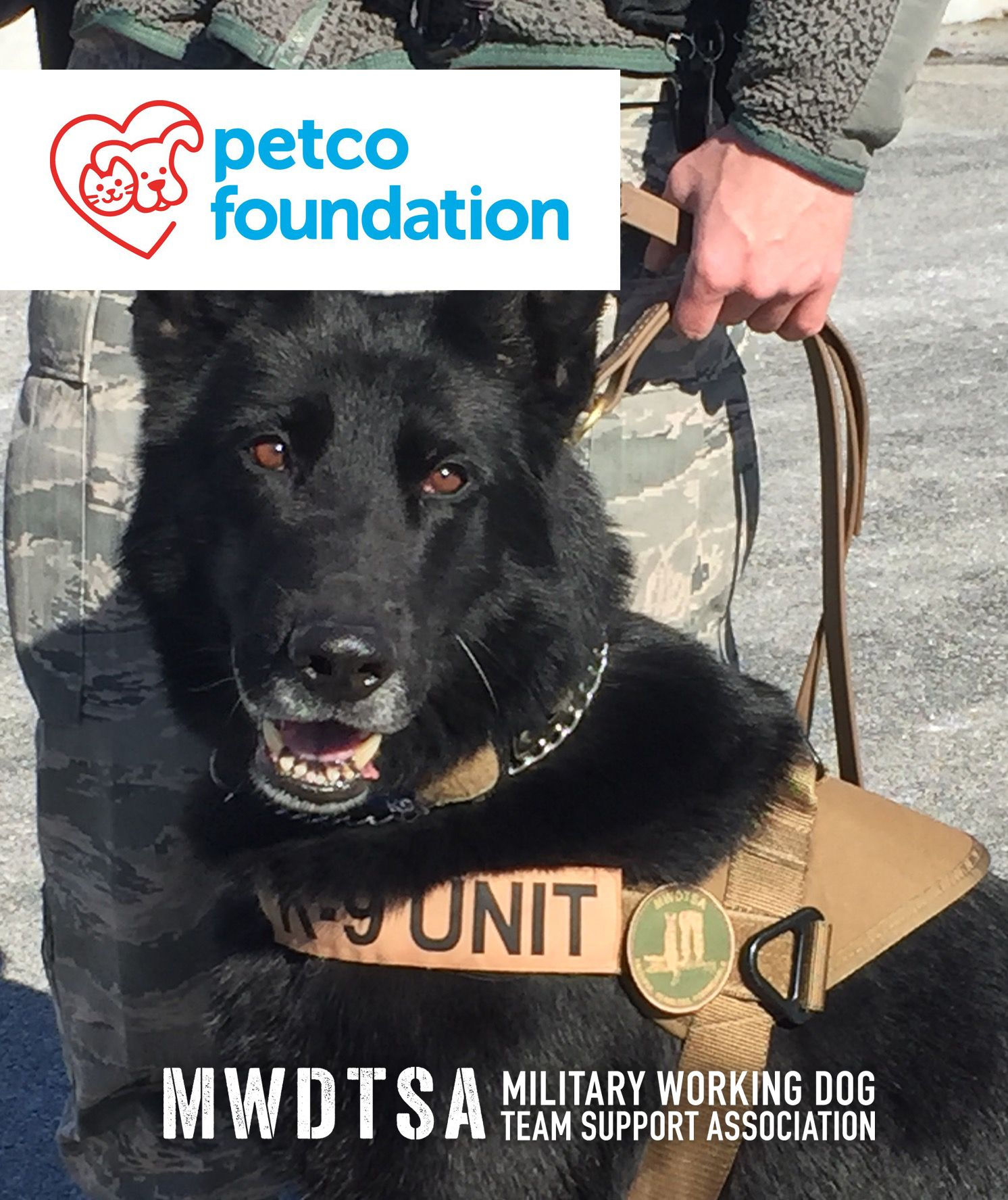 MWDs protect troops though explosives detection, specialized search, and more.
