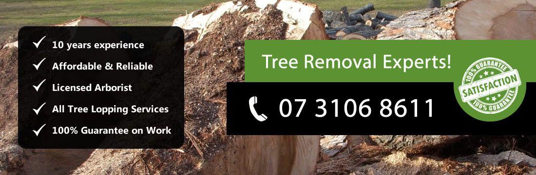 tree-removal-brisbane-banner