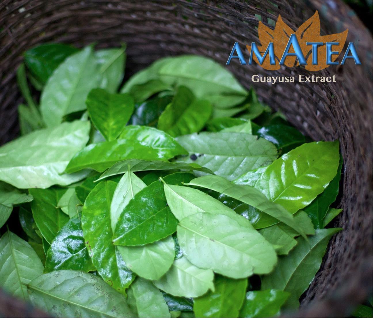 AMATEA™ Guayusa Extract