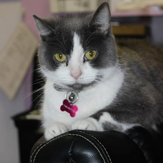 Cats such as this will be available at Petsense in Athens, TN