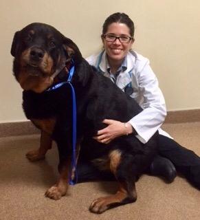 Dr. Ortiz of South Novato Animal Hospital in Marin County California