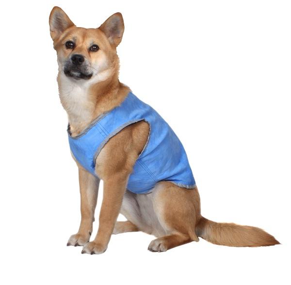 AKC Cooling Essentials Dog Vest