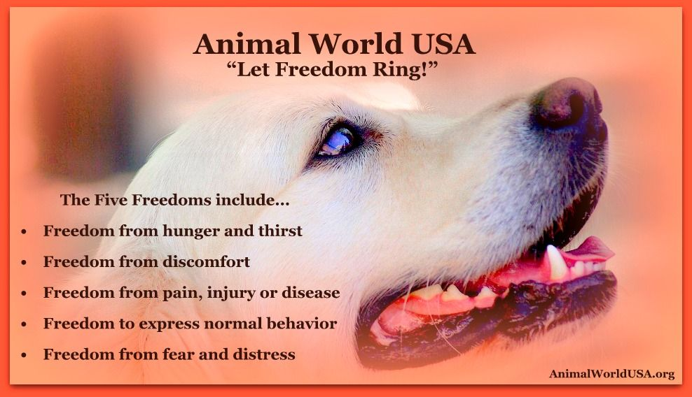 "Animal World USA ""Let Freedom Ring!"""