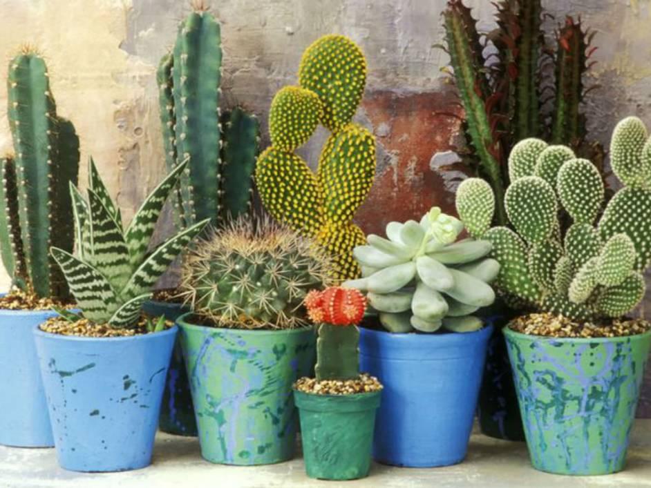 Cactus And Succulents Plants