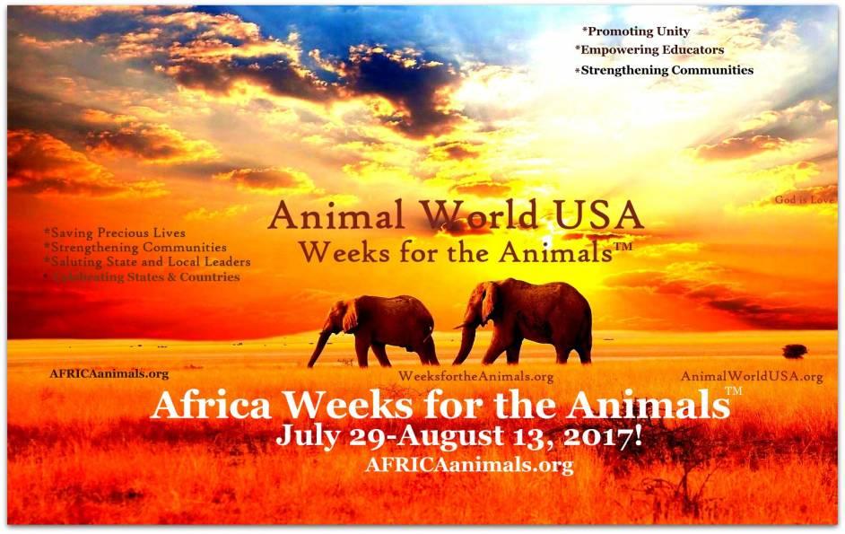 africa weeks 17