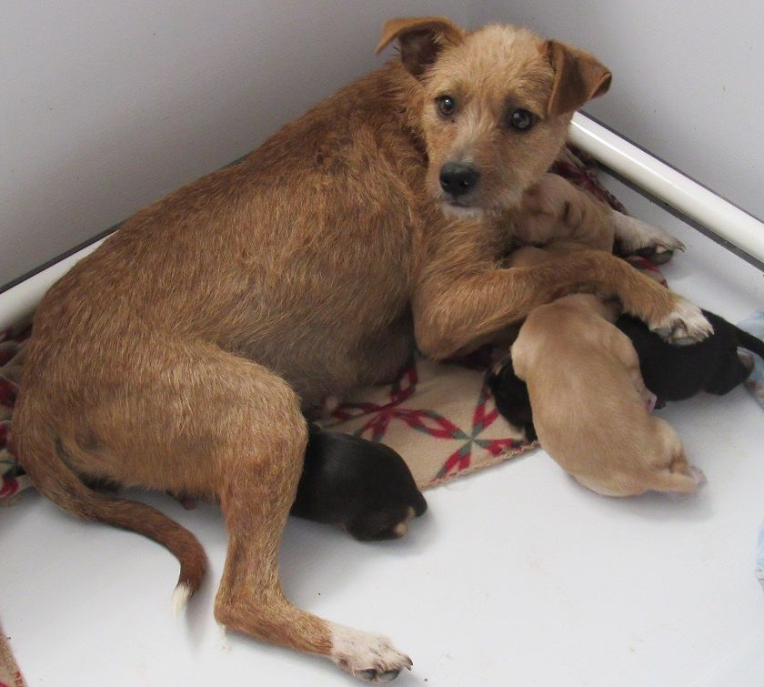 Grant helps humanely reduce litters of unwanted puppies and kittens.