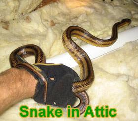 Snake In Attic