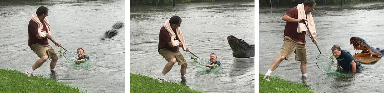 CP Alligator