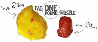educogym fat vs muscle