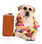 Dog Boarding - Yuba City, CA