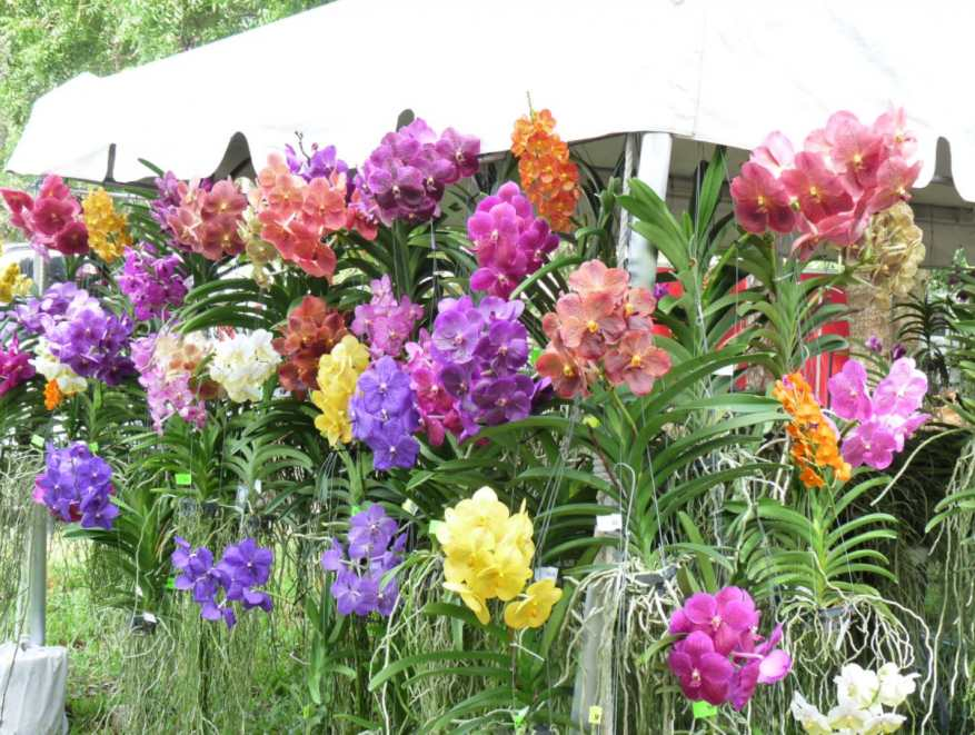 Plant-a-Palooza at Mounts