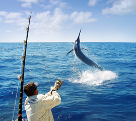 Far North Sports Fishing - Marlin Catch and Release