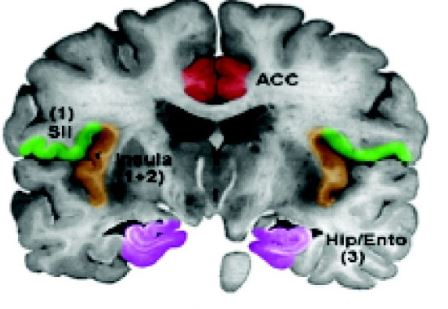 fMRI Processing