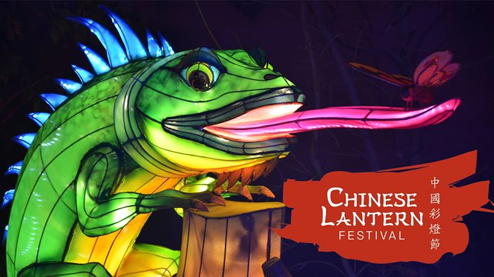 Chinese Lantern Festival's Lizard Welcomes a Visitor