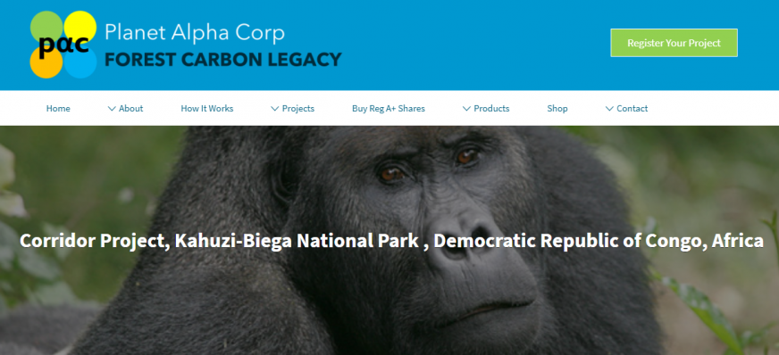 Strong Roots Congo Gorilla Conservation