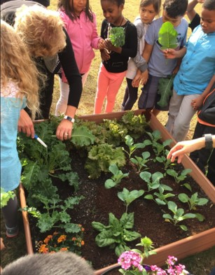 Elementary School Students Take a Peek at their New Plant It Forward Garden