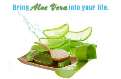 Bring Aloe Vera in Your Life