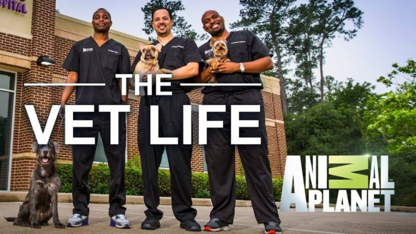 Animal Planet's Hit Show The Vet Life