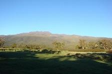 Mountkenya green