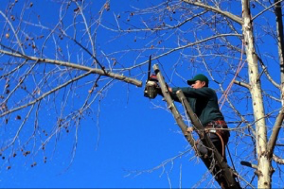 Hire an expert to handle your tree cutting service needs.