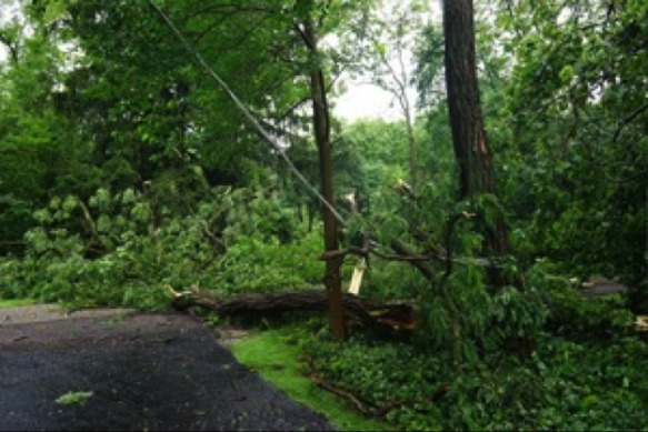We can handle any tree care service 24 hours a day.